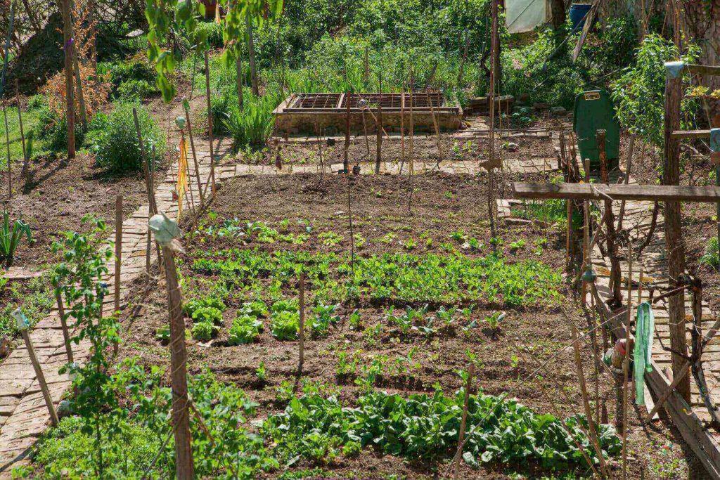 Gemüsegarten mit Gründüngung