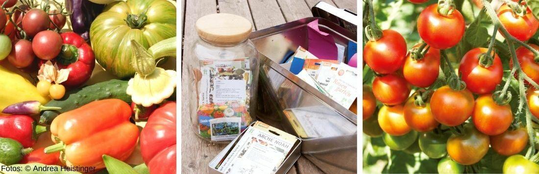 verschiedenes Gemüse und Saatgut in Behältern