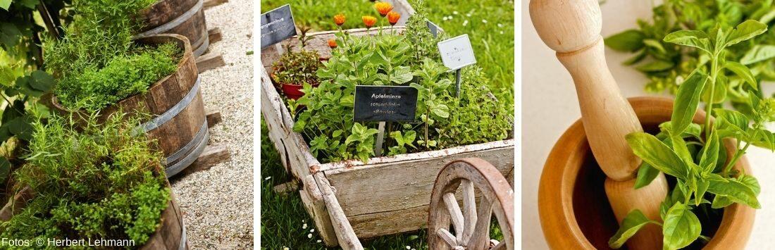 angepflanzte Kräuter