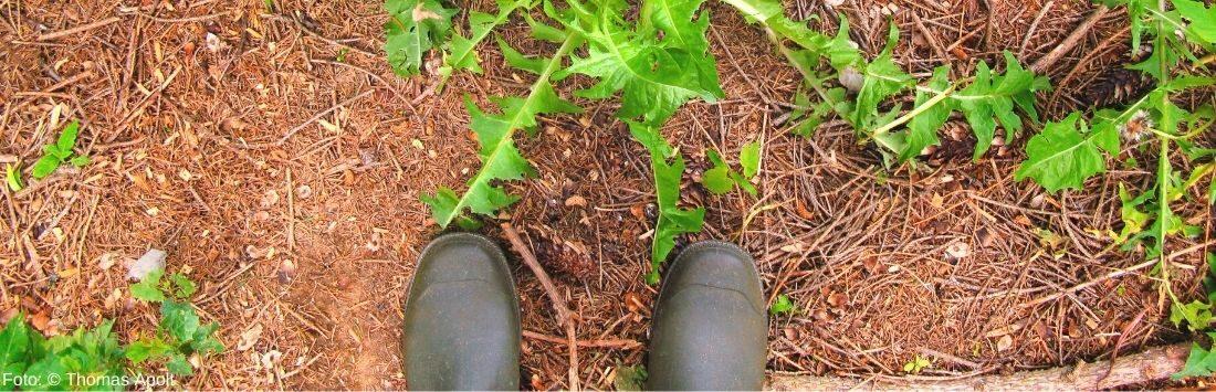Waldboden mit Stiefel