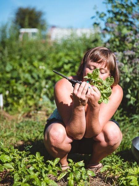 Frau riecht an frisch geerntetem Basilikum