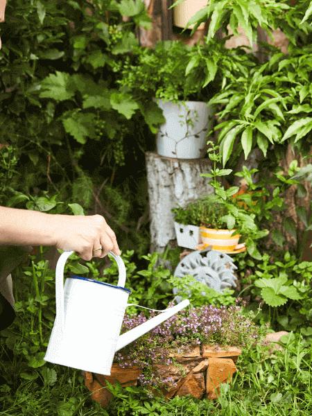 Kräutergarten, der mit Gießkanne gegossen wird