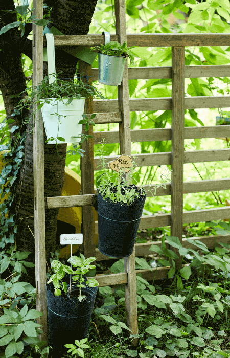 Kräuterleiter im Garten