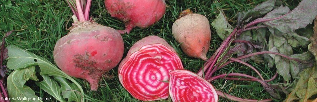 im Winter geerntetes Gemüse in der Wiese