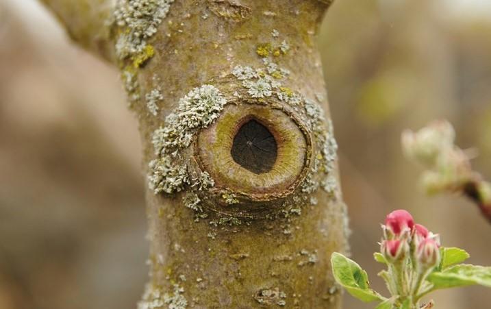 Baum verheilt nach Schnitt