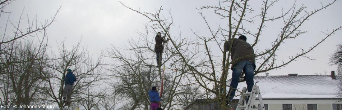 Menschen beim Obstbäume schneiden