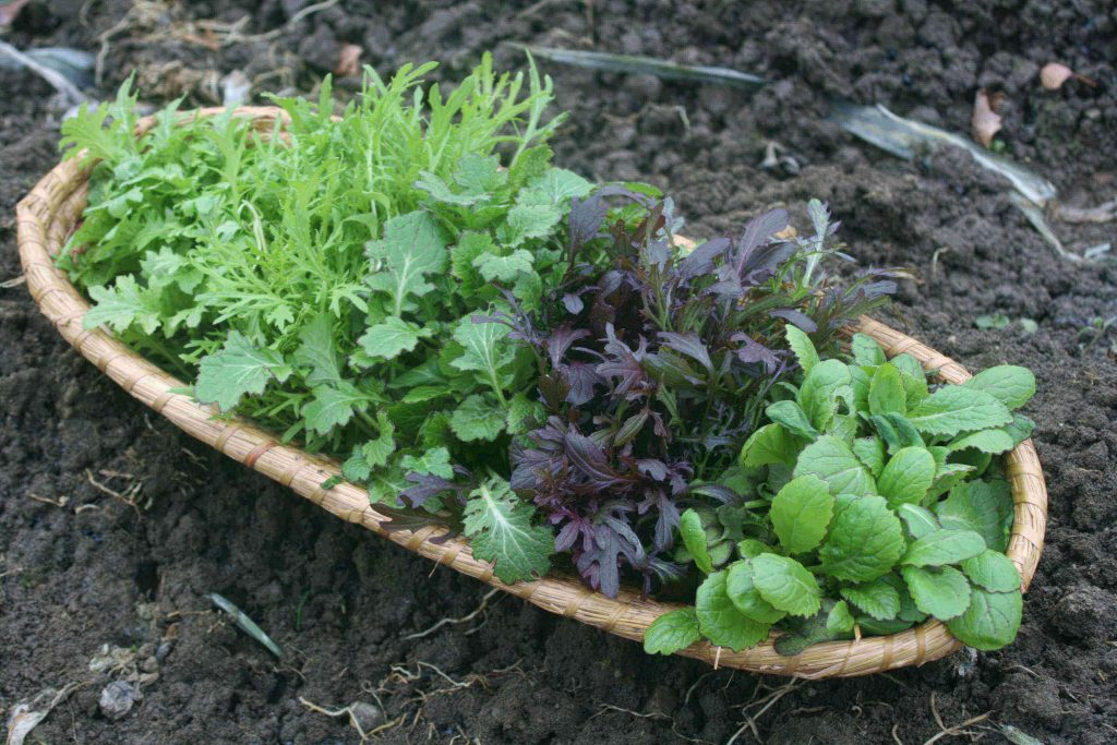 Ein Korb voller Freude: scharf-würzige Asia-Salate