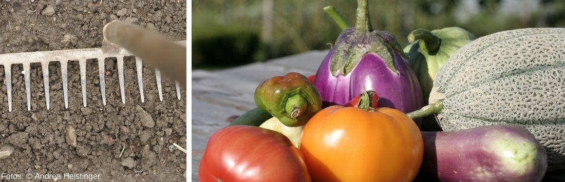 Erde mit Rechen und frisches Gemüse