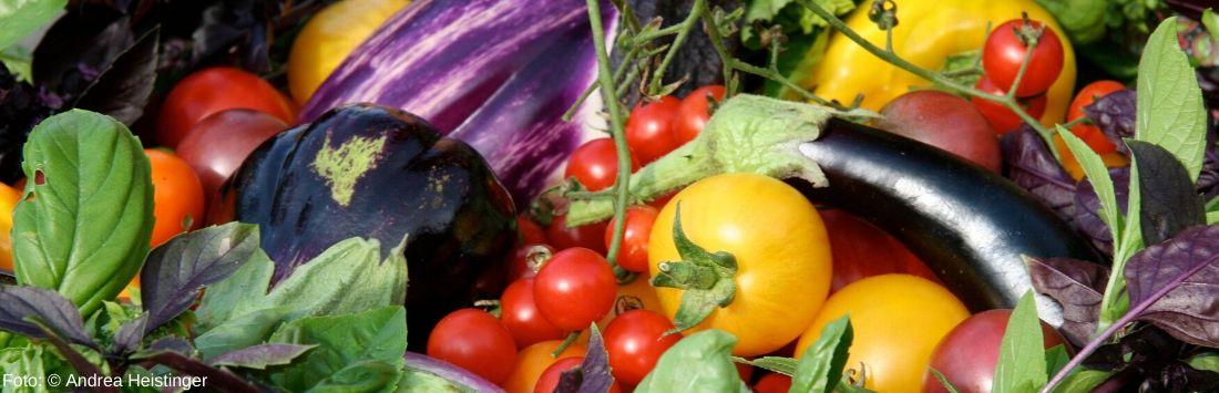 verschiedene Gemüsesorten aus der Selbstversorgung