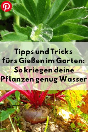 Tipps und Tricks fürs Gießen im Garten