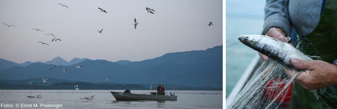 Boot am See und frisch gefangener Fisch