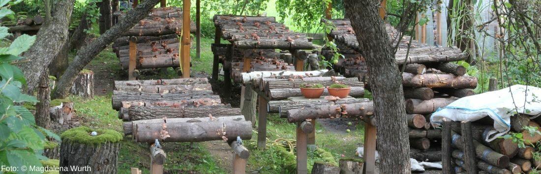 Pilze auf Holz im Garten