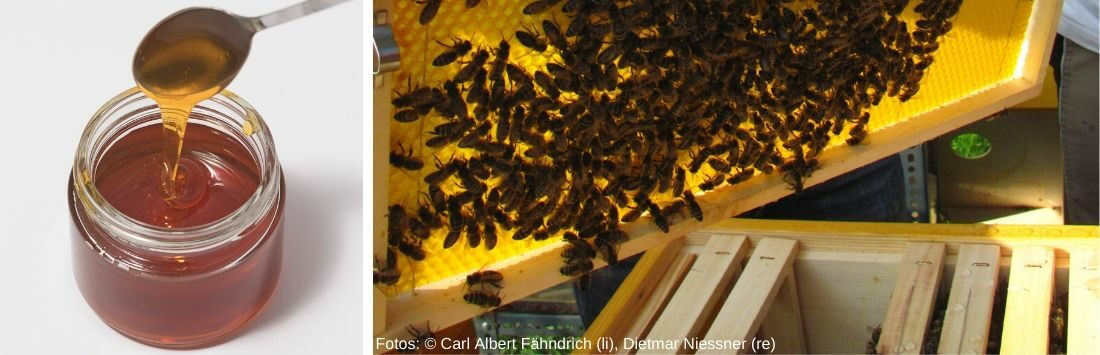 Honig im Glas und Bienenstock