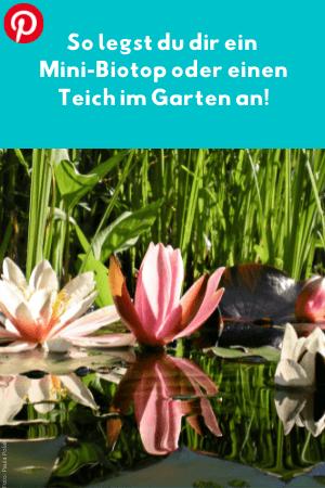 So legst du dir ein Mini-Biotop oder einen Teich im Garten an