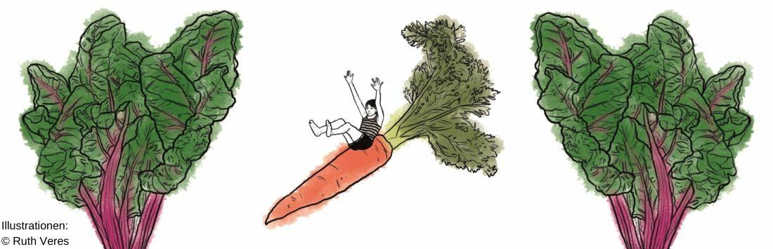 Illustrationen Mangold und Karotte mit kleiner Figur