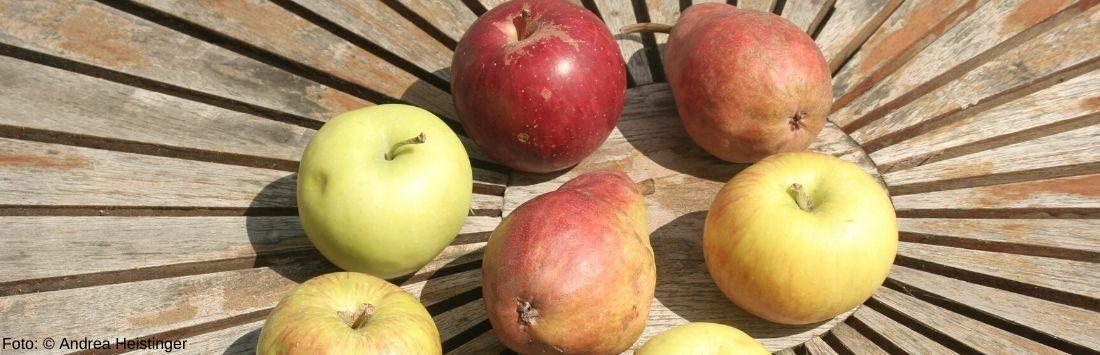 Äpfel und Birnen auf einem Tisch