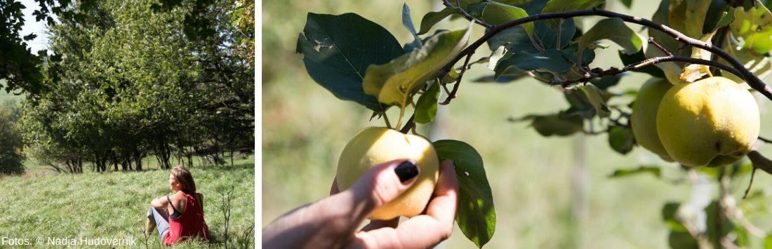 Sigrid Drage auf einer Streuobstwiese und Äpfel am Baum