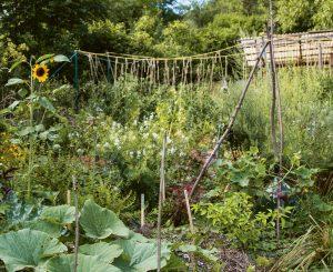 wild wachsender Garten