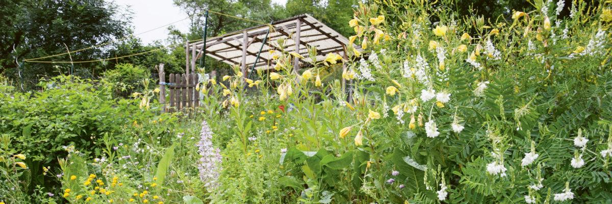 Permakultur Garten