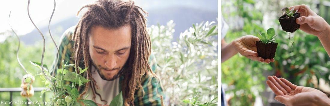 Mann im Balkongarten und Pflanzensetzlinge