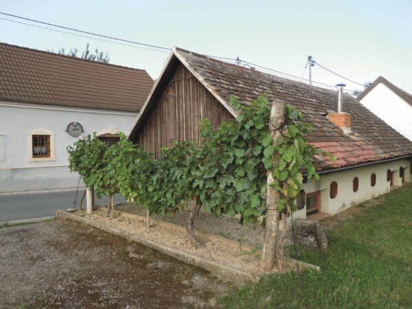 Kleine Rebzeile in einer typischen Kellergasse in Niederösterreich – wie es wohl im Keller aussieht? Foto: Toni und Sonja Schmid