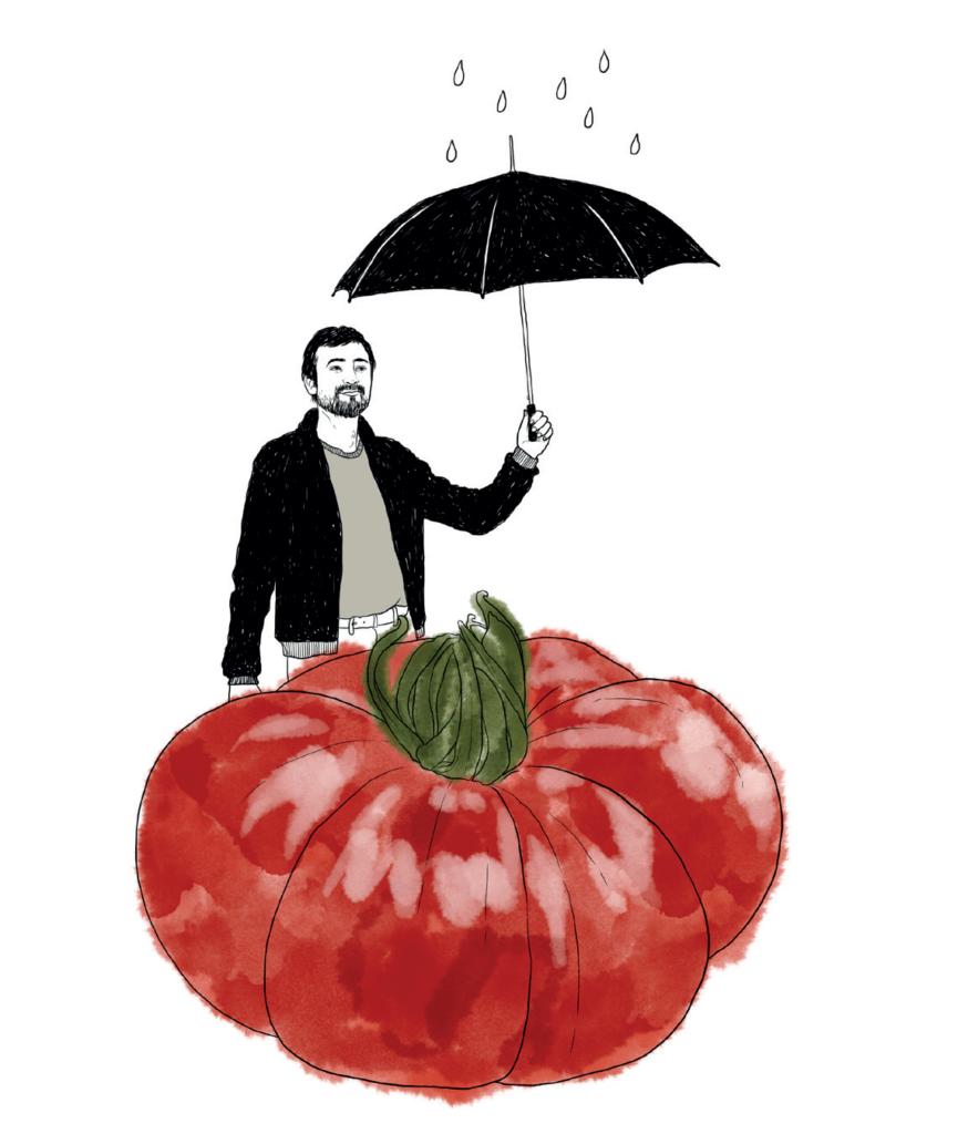 Tomate als Balkongemüse