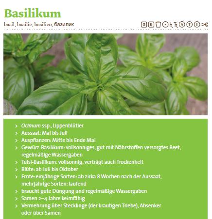 """Basilikum Portrait aus """"Kräuter richtig anbauen"""" von Andrea Heistinger/Arche Noah, die wichtigsten Eckdaten für euch, um Basilikum pflanzen zu können."""