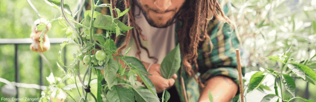 Ob Tomate, Paprika oder Gurke - freu dich auf dein Balkongemüse!