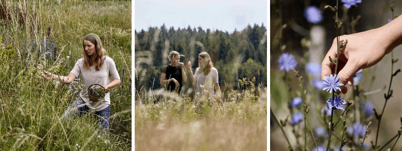 Wo kann man essbare Wildkräuter besser kennenlernen als auf einer Kräuterwanderung? Gerda Holzmann nimmt ich auf ihren Kräuterwanderungen mit in die wilde Waldviertler Natur! Fotos: © Rupert Pessl