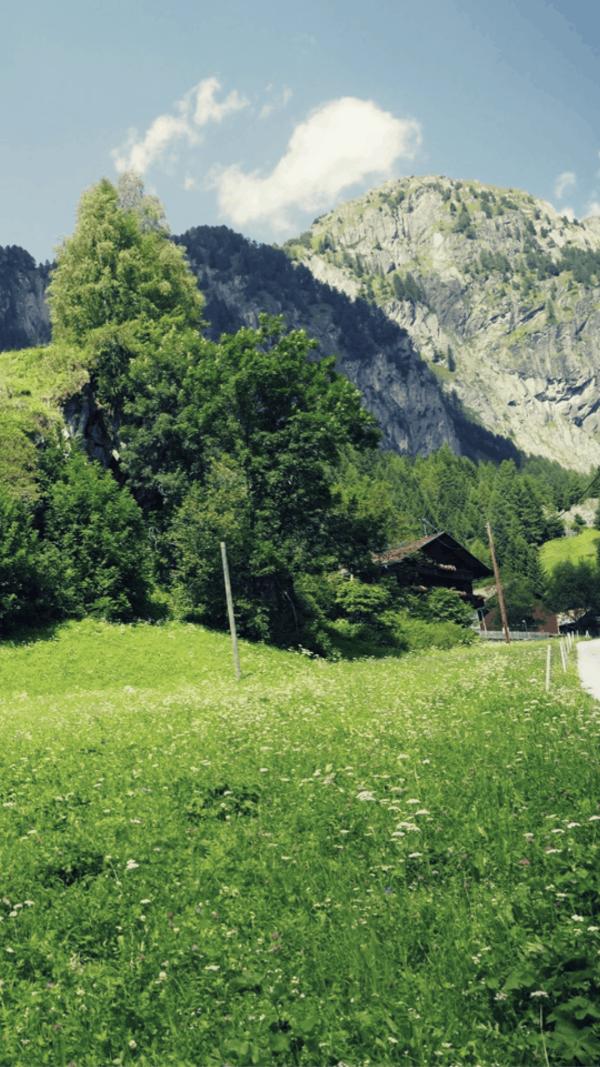 Welche Kräutlein findest du auf der Kräuterwanderung mit Liesa Rechenburg? Foto: Liesa Rechenburg