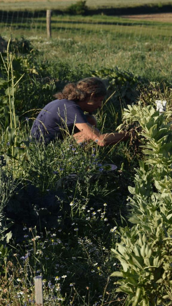 Gestalte dir deinen Permakultur Garten! Sigrid Drage und Andreas Voglgruber zeigen dir, wie es klappt. Foto: Sigrid Drage