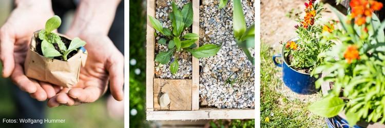 Pflanzen selber ziehen zählt immer noch zur einfachsten Methode, um seinen Garten und Balkon ergrünen zu lassen.