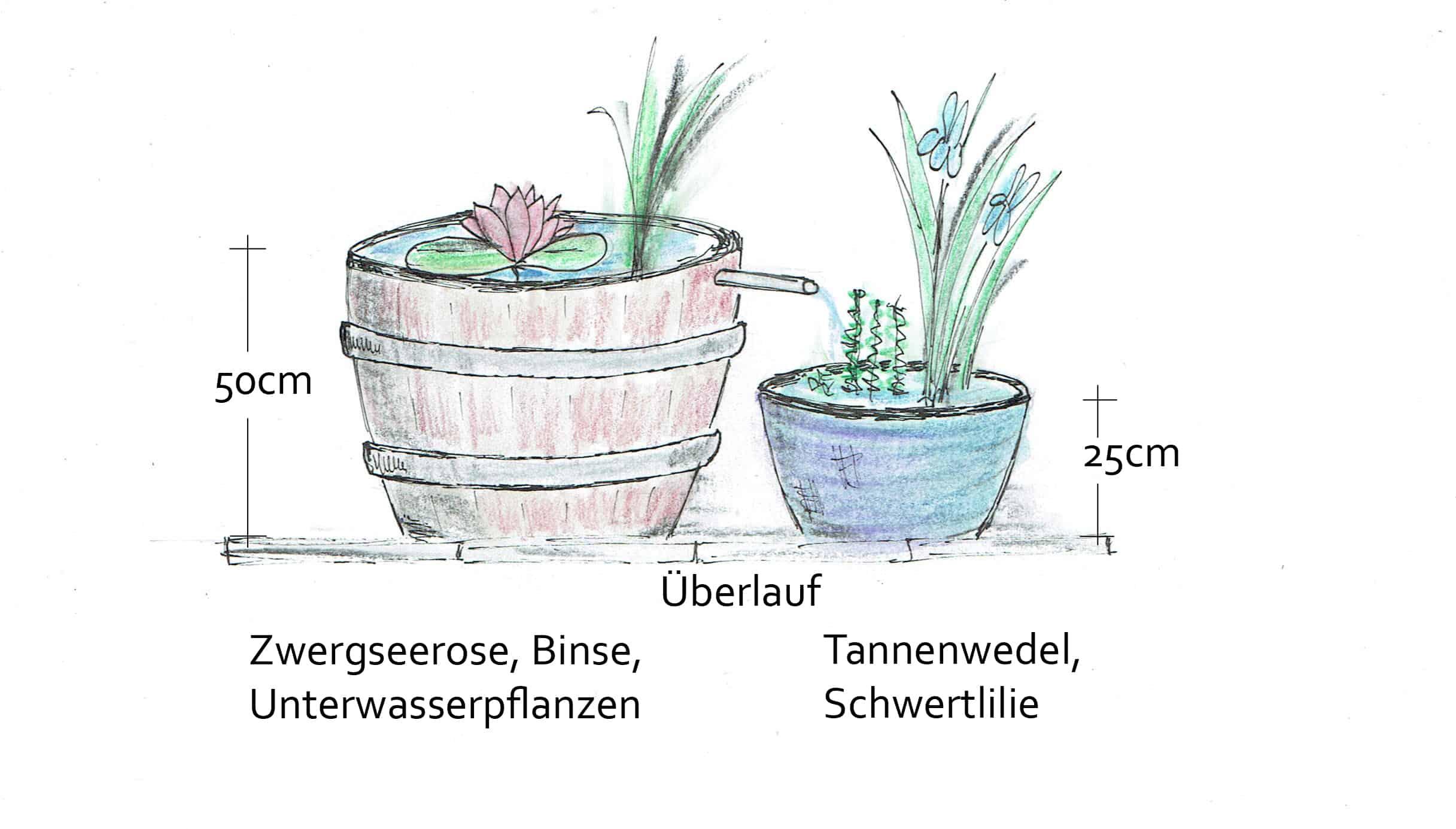 Balkontrogkombination als Miniteiche. Zeichnung: Paula Polak