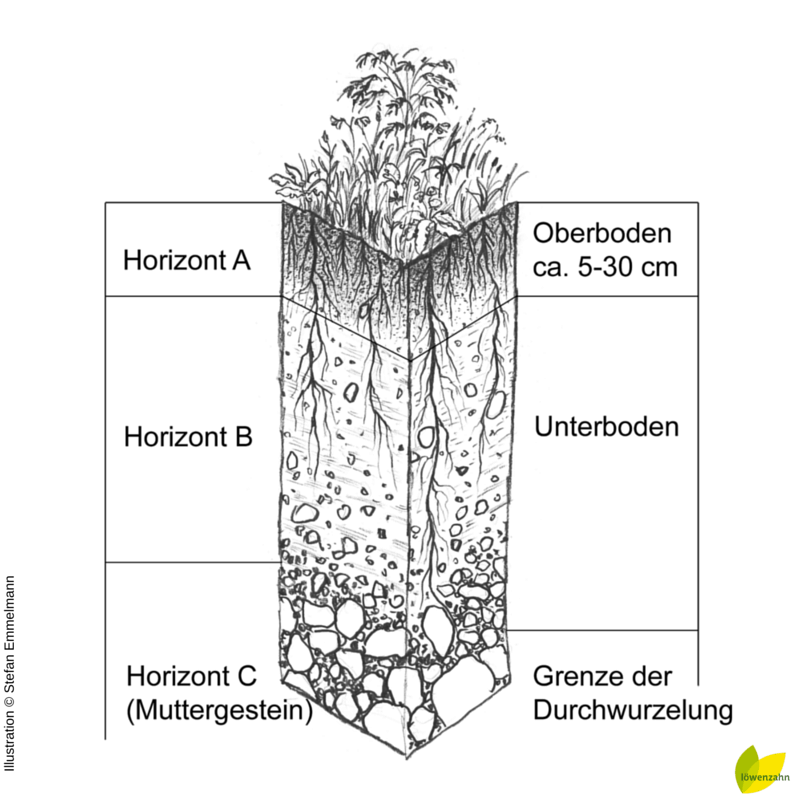 Bodenschichten Illustration (c) Stefan Emmelmann