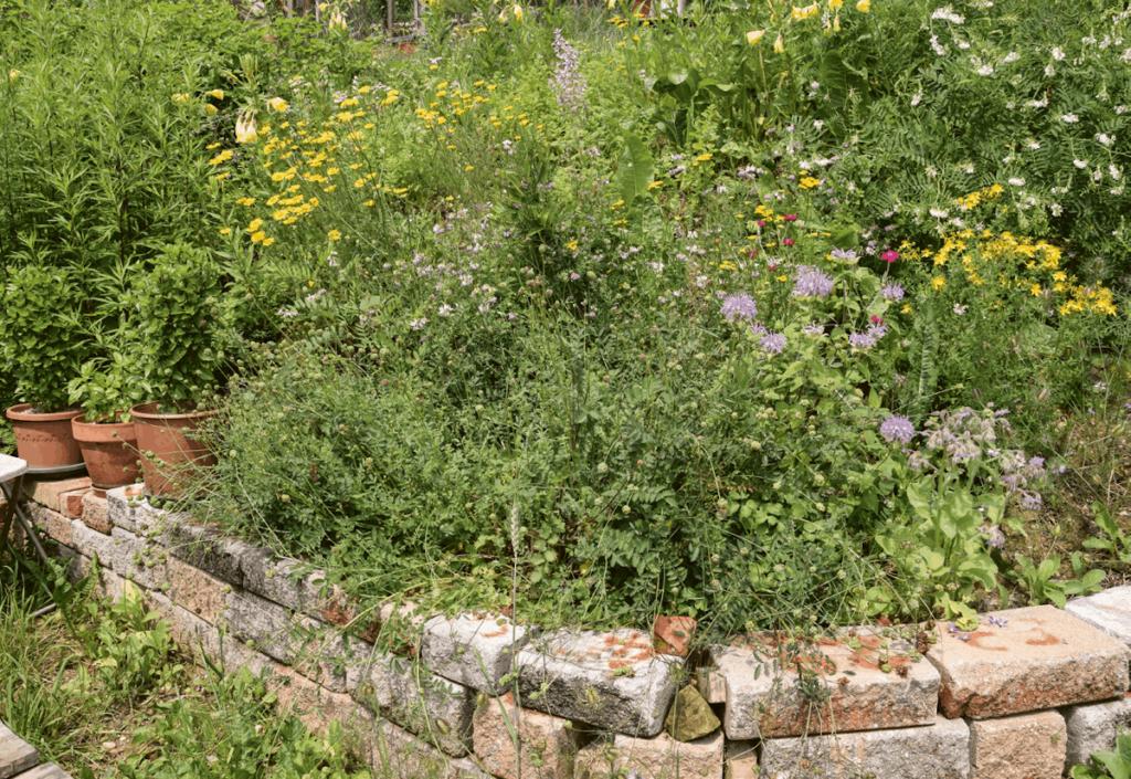 Naturgarten anpflanzen