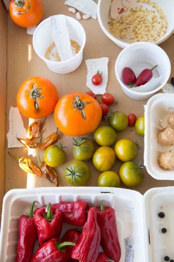 Welche Gemüsesorten willst du in deinem Permakultur Garten anpflanzen? Foto: Nadja Hudovernik