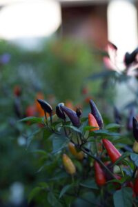 anleitung für gemüse in deinem permakultur-garten