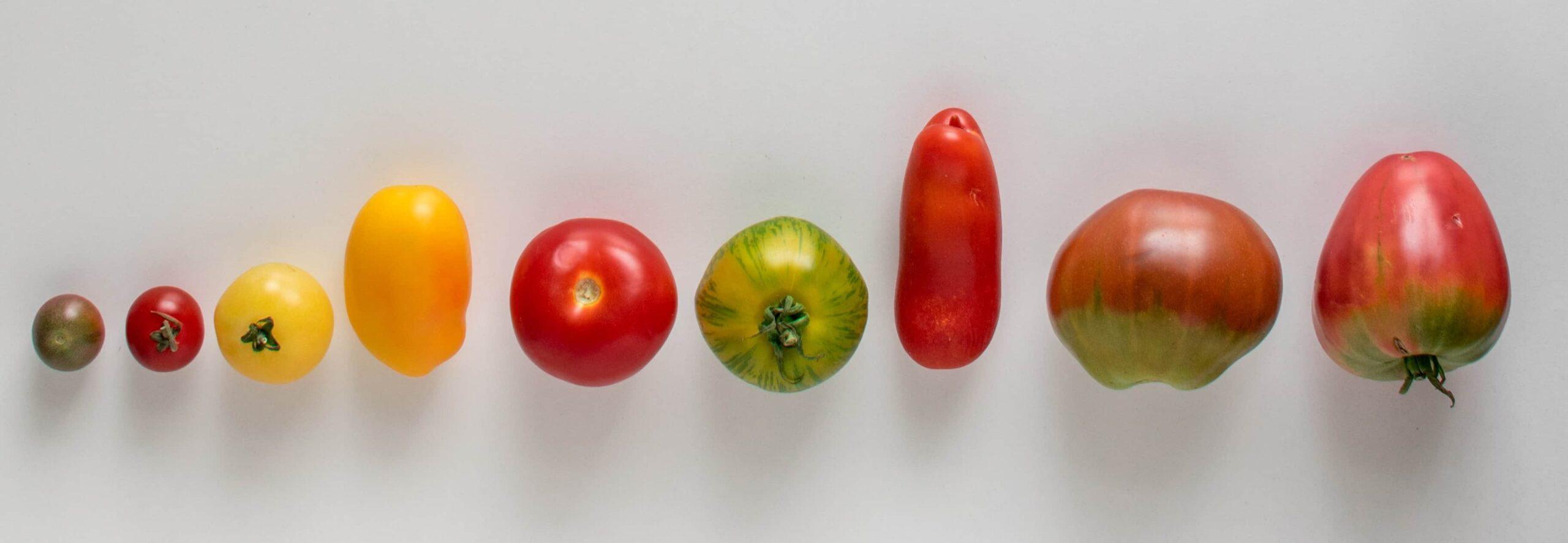 schmuckfoto tomaten hochformat (2)