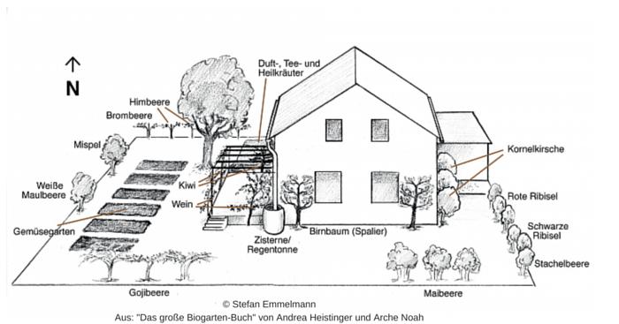"""Garten anlegen: Auch ein durchschnittlich großer Garten lässt sich vielfältig mit Nutzpflanzen bebauen. Außerhalb des Weinbaugebietes müssen Weiße Maulbeere und Mispel durch kälteverträglichere Pflanzen ersetzt werden. Statt Obststräuchern kann man auch Topinambur als Sichtschutzpflanze entlang des Zaunes pflanzen. Oder man pflanzt verschiedene großfruchtige Wildrosen, die dann im Winter köstliche Hagebutten tragen. Zu den Ansprüchen der einzelnen Arten findest du weitere Infos in """"Das große Biogarten-Buch"""" von Andrea Heistinger und Arche Noah, das auch als Gartenplaner wertvolle Dienste leistet."""