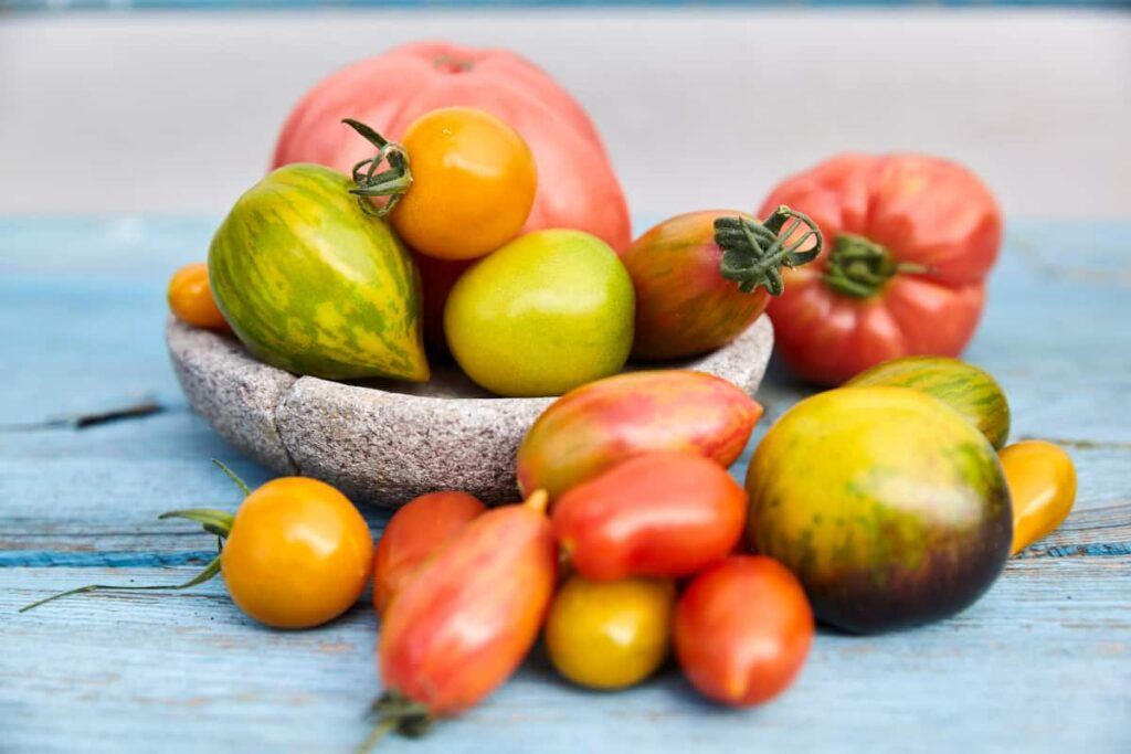 Tomaten vom Balkongarten