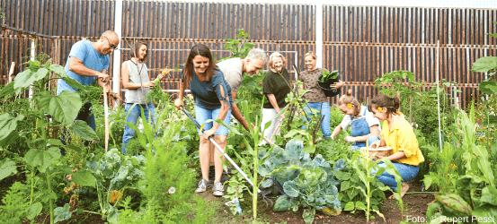 Menschen bei der gemeinschaftlichen Gartenarbeit
