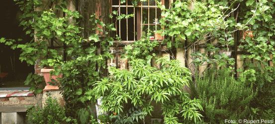 mit Kräutern verwachsenes Haus