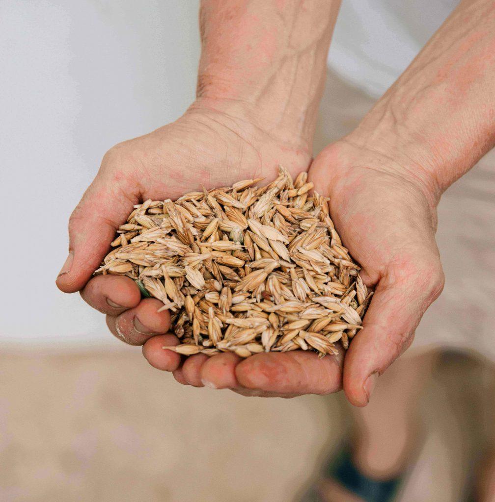 Dinkelspelzen: Darin verstecken sich die Körner