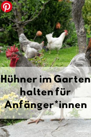 Hühner im Garten halten für Anfänger*innen