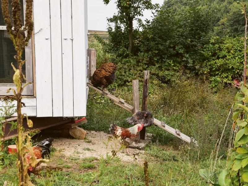 Sandbad und Hühner