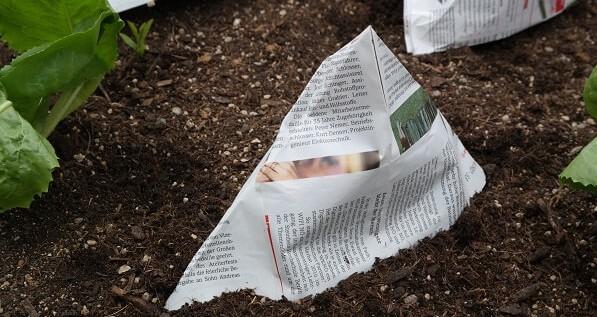 Mit Zeitungspapier kannst du Papiertütchen falten und deinen Pflanzen aufsetzen