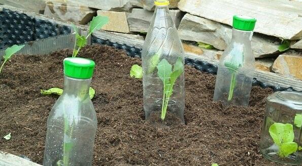 PET-Flaschen für die Jungspunde unter deinen Pflanzen