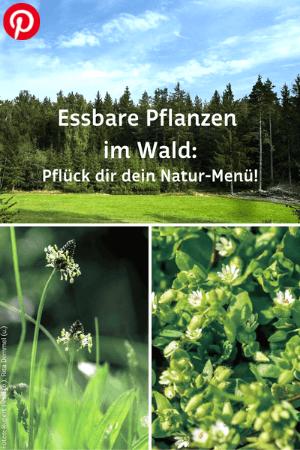Essbare Pflanzen im Wald: Pflück dir dein Natur-Menü!