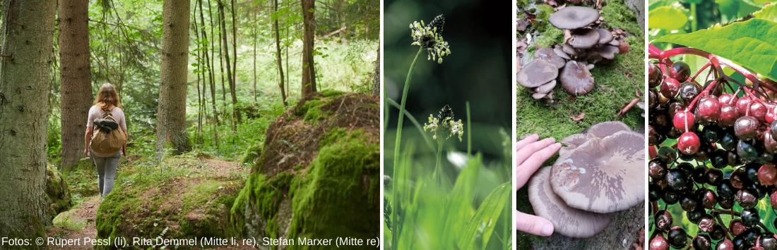 Mach dich auf in den Wald - und entdecke viele Naturschätze!