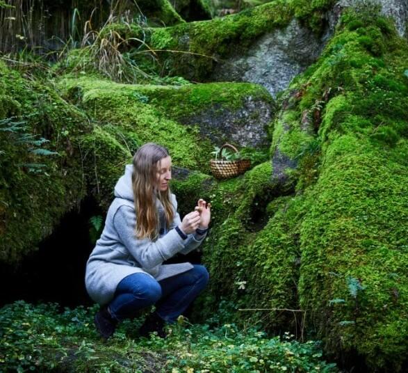 Sammeln im Wald